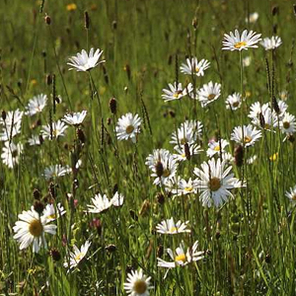 All Wildflower Mixes