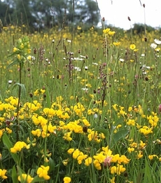 Dry, Sandy and Loam Soils Wildflower Seeds LW3P 100%