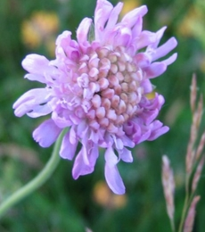 Dry Soils Wildflower Plant Collection