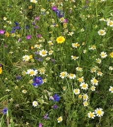 Countryside Delight Flower Mixture