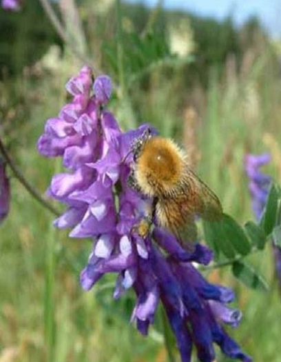 Bee Wildflower Plant Collection
