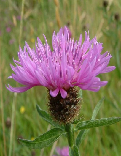 Clay Soils Wildflower Plant Collection