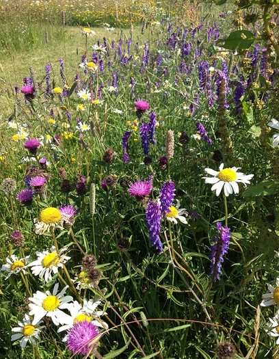 Hedgerow and Shade Wildflower Seeds LW7M 80/20