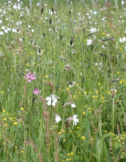 Loam and Alluvial Soils Wildflower Seeds LW4M 80/20