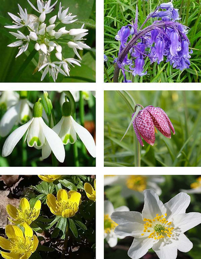 Wildflower Bulb Collection